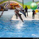 dolphinarium-25