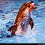 dolphinarium-28