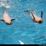 dolphinarium-29