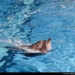 dolphinarium-3