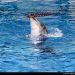 dolphinarium-4