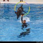 dolphinarium-5