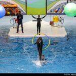 dolphinarium-6