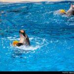 dolphinarium-7