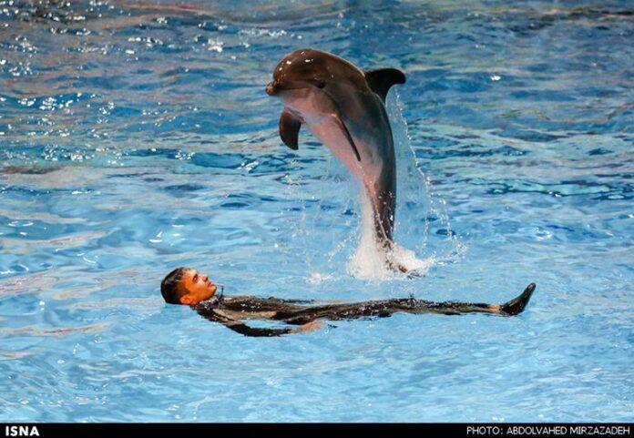 dolphinarium00