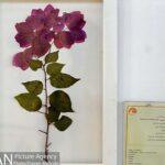 Botanical Museum-142