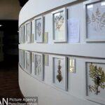Botanical Museum-41