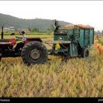 Rice harvest1
