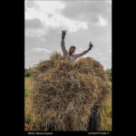 Rice harvest22
