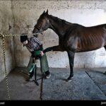 horseshoes105_b