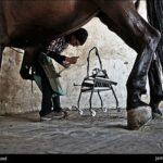 horseshoes199_b