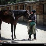 horseshoes475_b