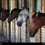 horseshoes506_b