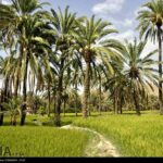 southeastern Iran15