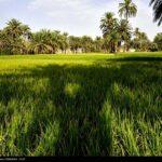 southeastern Iran17