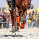 Horse show32