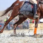 Horse show45