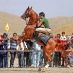 Horse show55