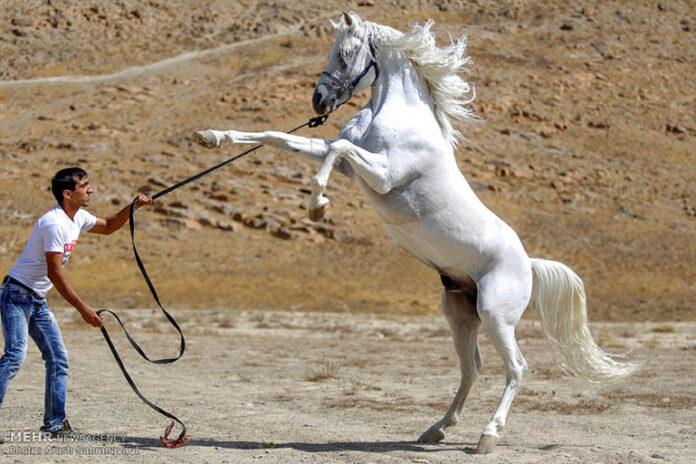 Horse show60