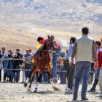 Horse show76