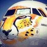 cheetah-airplane