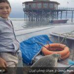 Caspian seals4