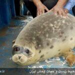 Caspian seals5