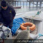 Caspian seals8