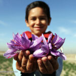 Saffron_866
