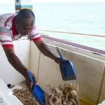 Shrimp hunting_4128