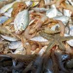 Shrimp hunting_4344 (2)