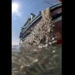 Shrimp hunting_7528