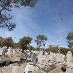 cemetery3689060_207