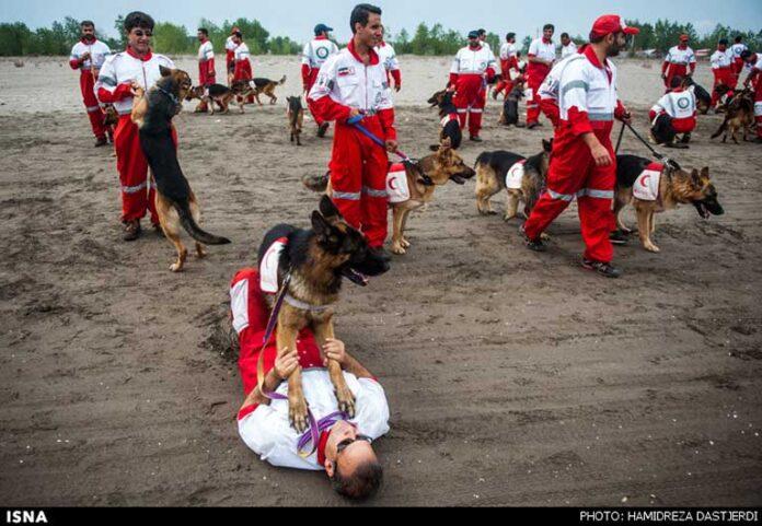 dog training 00