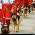 dog training -10