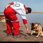 dog training -13