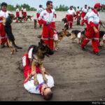 dog training -19