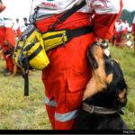 dog training -2