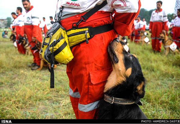 Image Result For Gps Dog Training