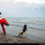 dog training -20