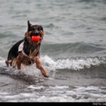 dog training -22