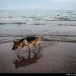 dog training-23