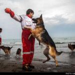 dog training -24