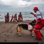 dog training -25