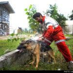 dog training -29