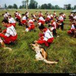 dog training -3