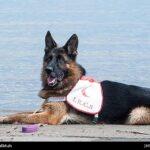 dog training-31