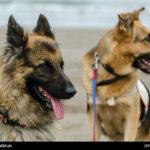 dog training-32