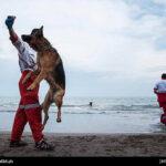 dog training-33