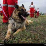 dog training-34